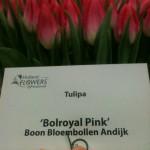 Bolroyal Pink