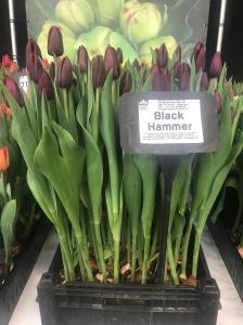 BLACK HAMMER (2)