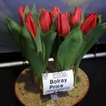 BOLRAY PRICE