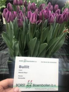 BULLIT (2)