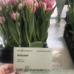 DOTCOM (4)