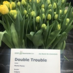DOUBLE TROUBLE (2)