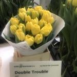 DOUBLE TROUBLE2