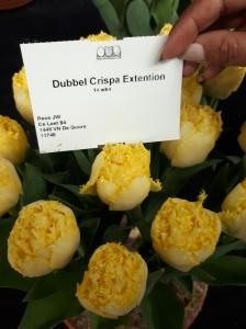 DUBBEL CRISPA EXTENTION 2