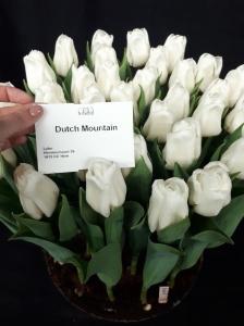 DUTCH MOUNTAIN 2
