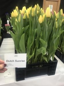DUTCH SUNRISE (2)