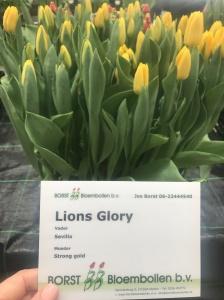 LIONS GLORY
