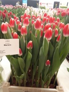 MARRERO 2