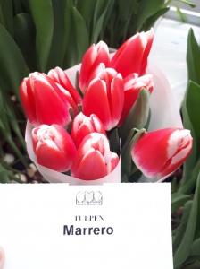 MARRERO