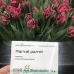 MARVEL PARROT