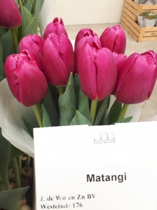 MATANGI