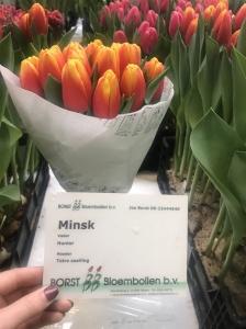MINSK (3)