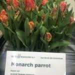 MONARCH PARROT