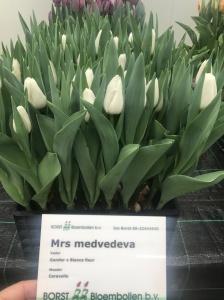 MRS MEDVEDEVA (2)