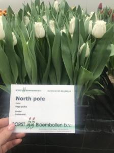 NORTH POLE (2)