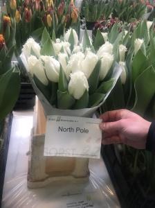 NORTH POLE2