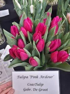 PINK ARDOUR 2