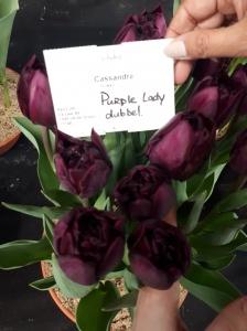 PURPLE LADY DUBBEL 3