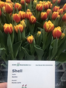 SHELL (2)