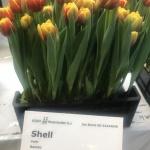 SHELL (3)