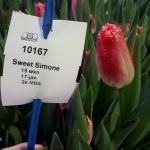 SWEET SIMONE 3